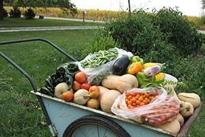 Garden bounty 2012