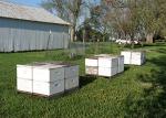 bee hives May 11 2013