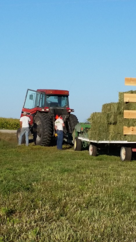 We made 187 bales off of five acres. This is the first year for this field. We expect 3 good cutting next year.