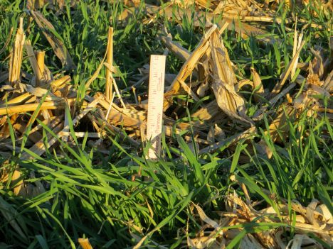 cover crop, conservation
