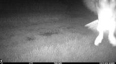 Owl trying to land on the trailcam?